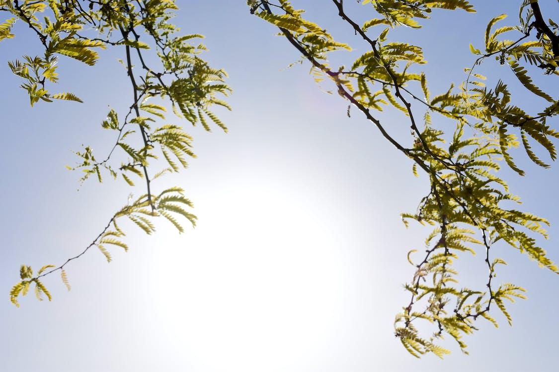 arbre, lumière du soleil, melbourne