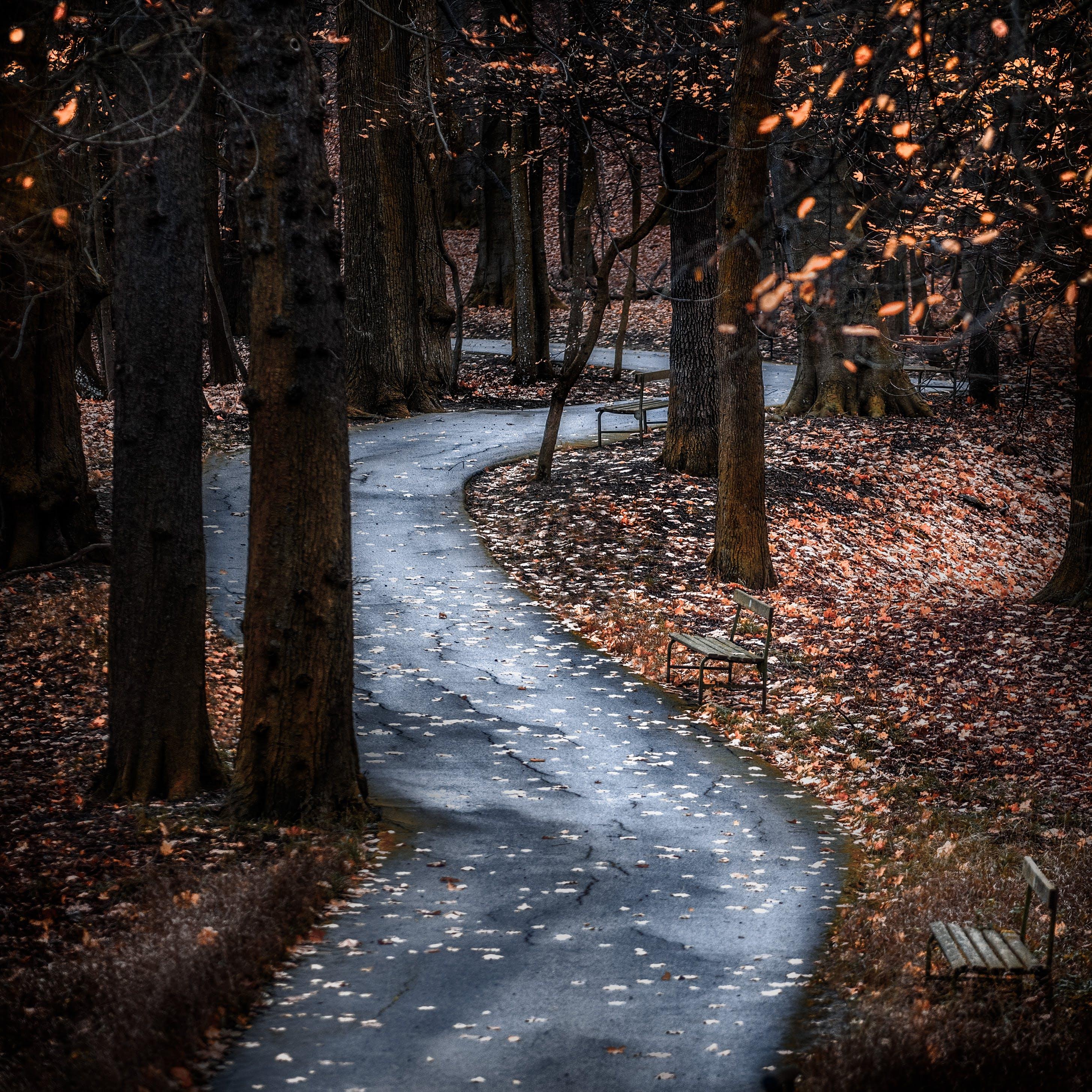 คลังภาพถ่ายฟรี ของ คำแนะนำ, ต้นไม้, ทาง, ทางเดิน