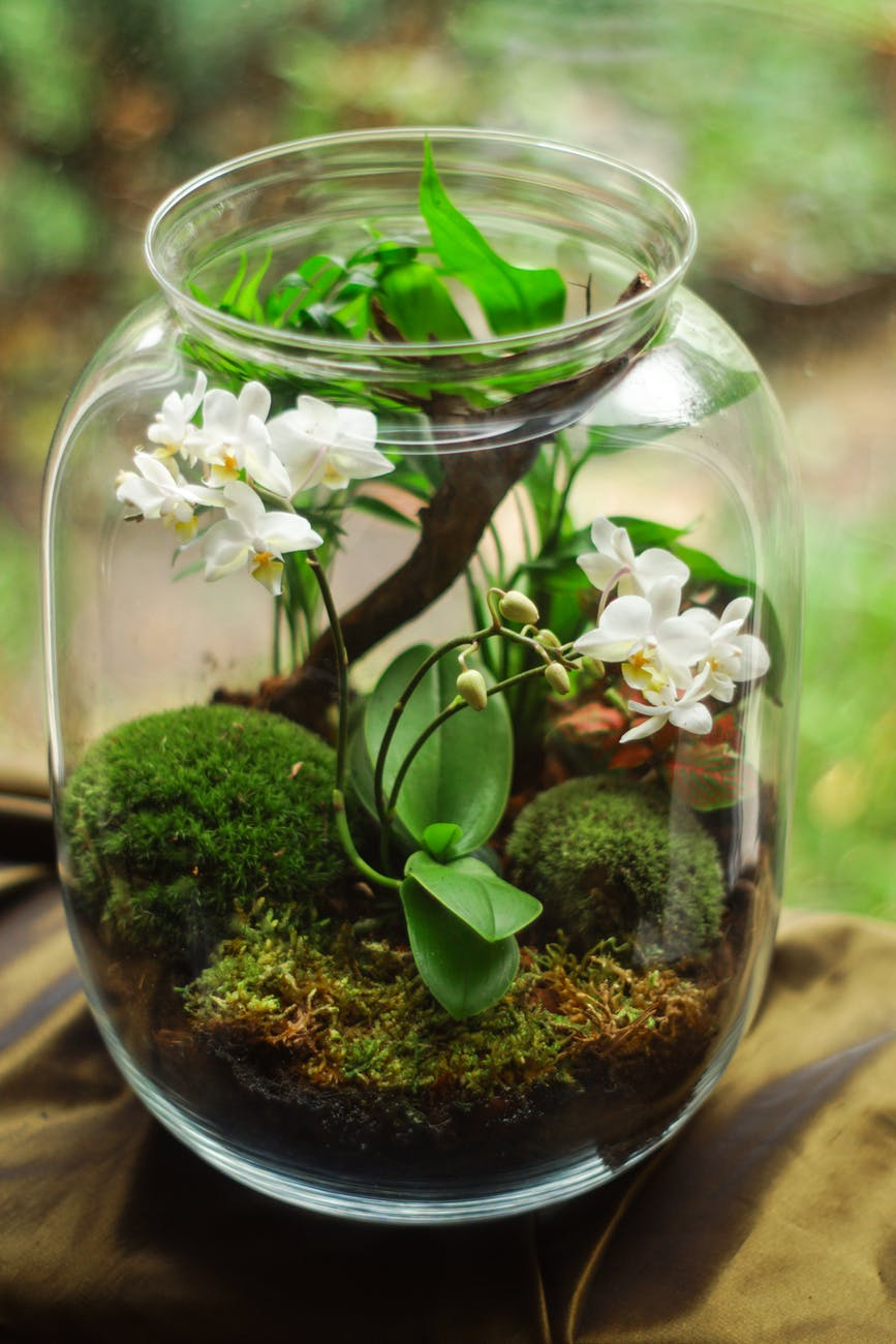 Milk Bottle Terrarium | 23 DIY Mini Plant Terrarium Ideas