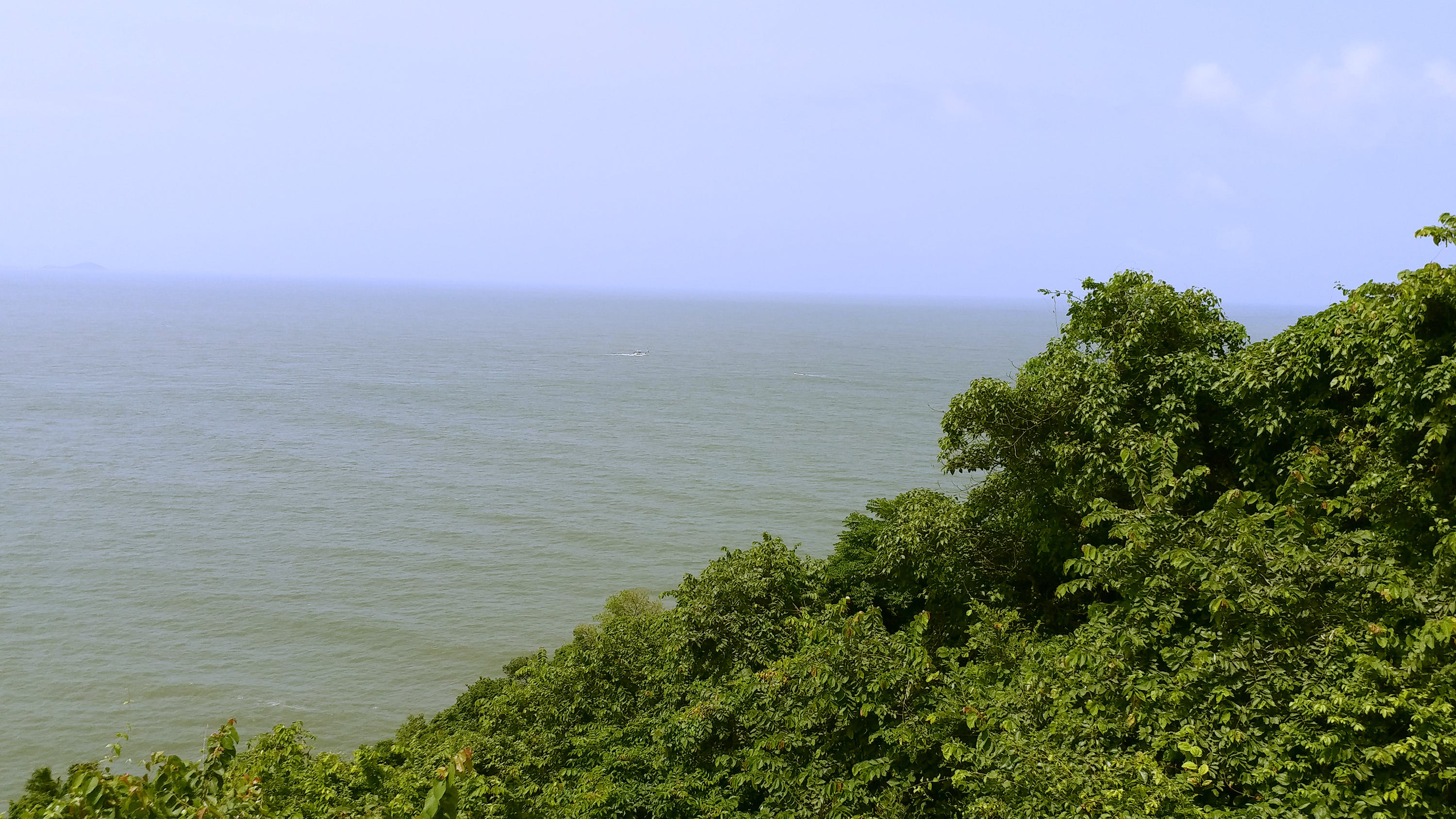 Free stock photo of beach, green, leaves, ocean