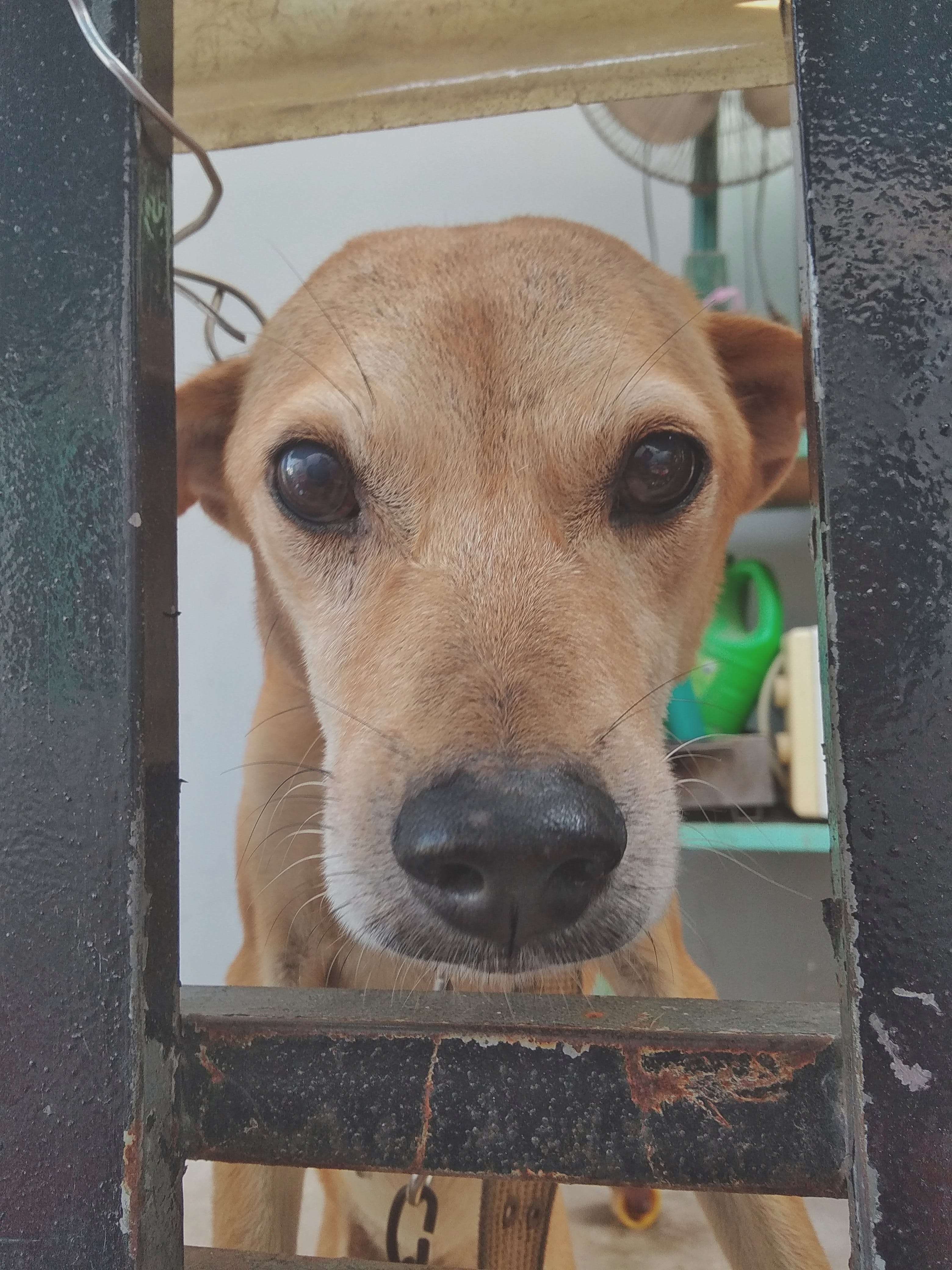 Free stock photo of #dog, animal, Hello