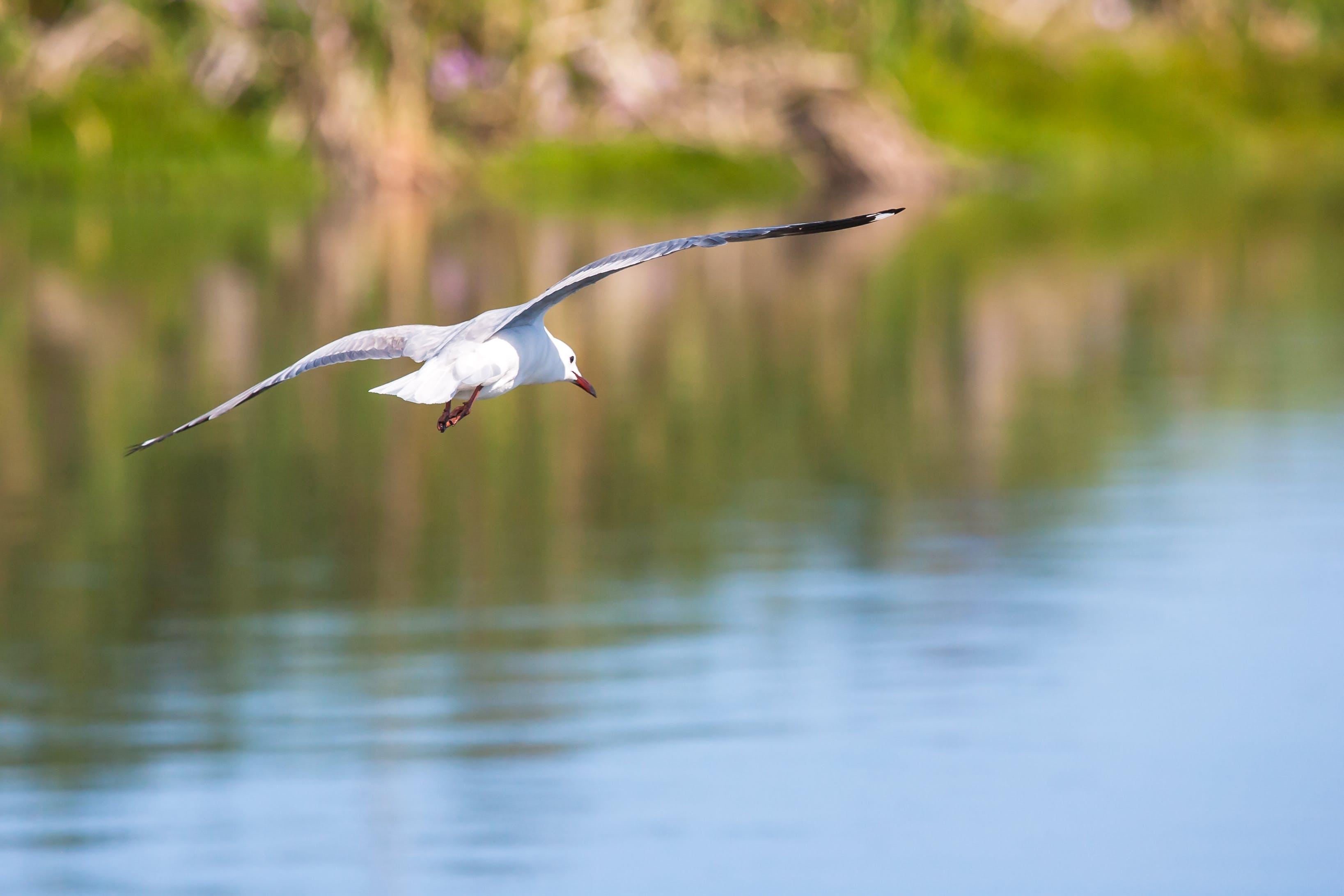 Δωρεάν στοκ φωτογραφιών με άγρια φύση, ζώο, κίνηση, νερό
