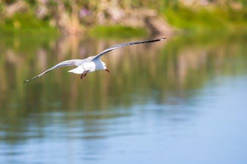 Foto profissional grátis de água, animais selvagens, animal, asas