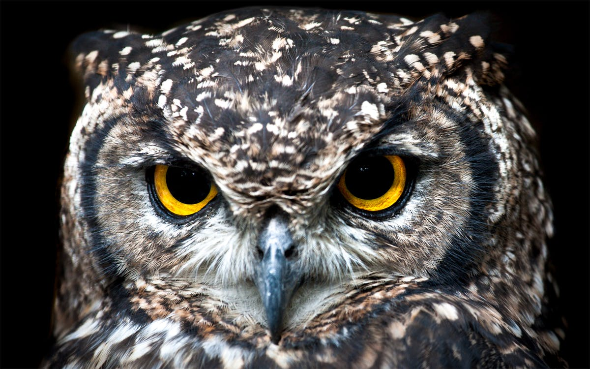 Close Up Photography of Owl