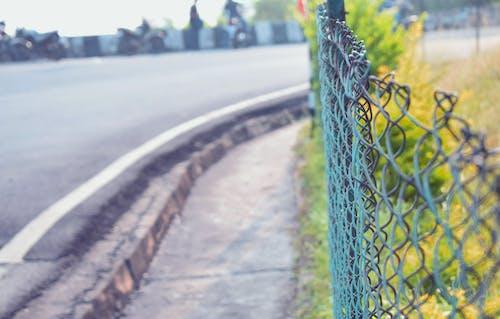 Foto profissional grátis de cerca, fundo verde, limite, mãe natureza