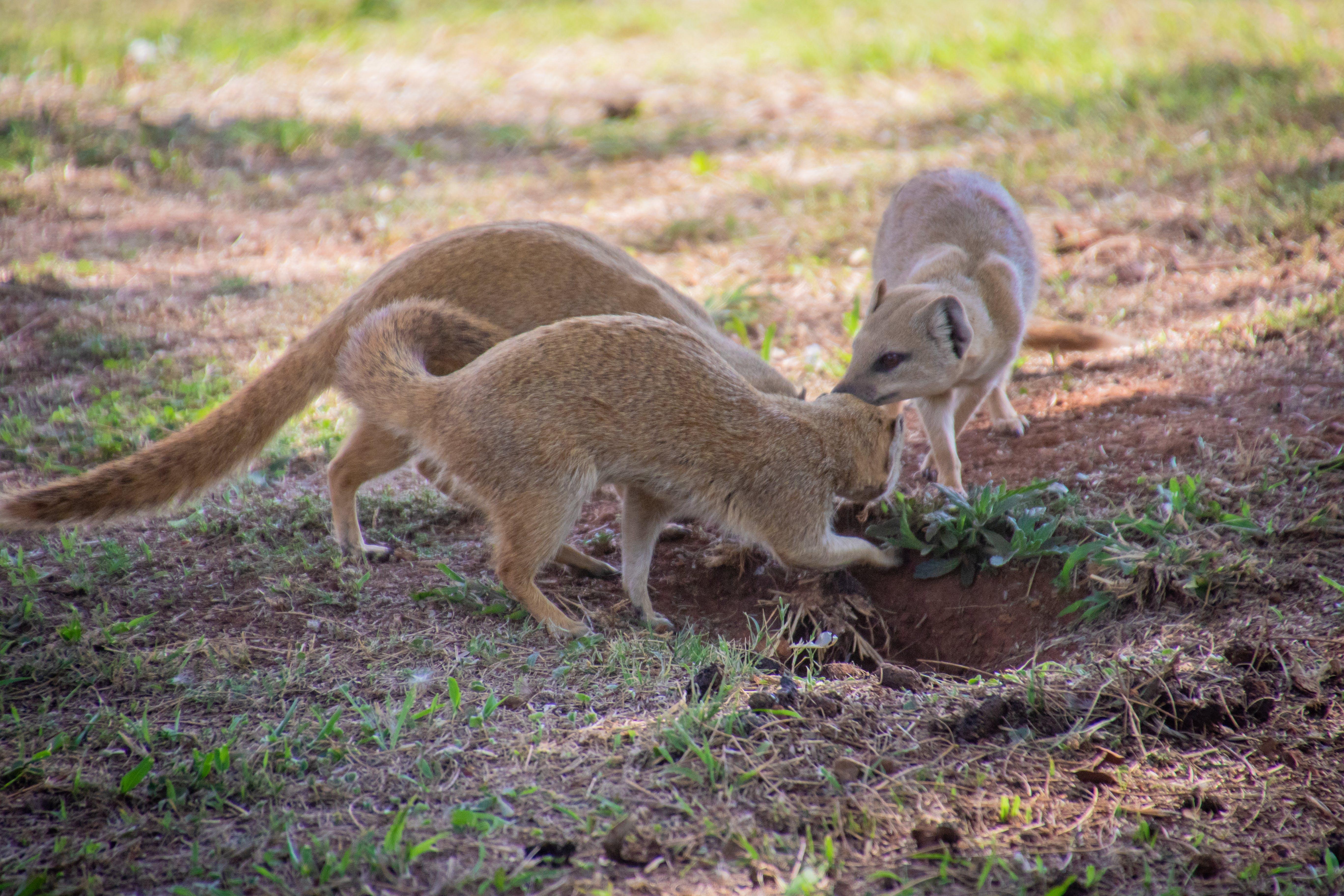 Free stock photo of nature, animal, cute, wild