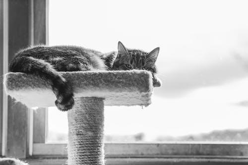 Ilmainen kuvapankkikuva tunnisteilla eläin, katsominen, kissa, kissanpentu