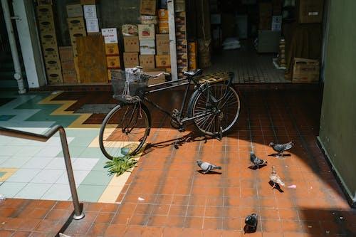 Kostenloses Stock Foto zu architektur, bestände, fahrrad, fahrzeug
