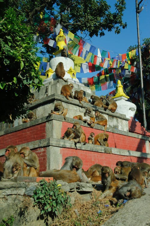 Foto stok gratis monyet