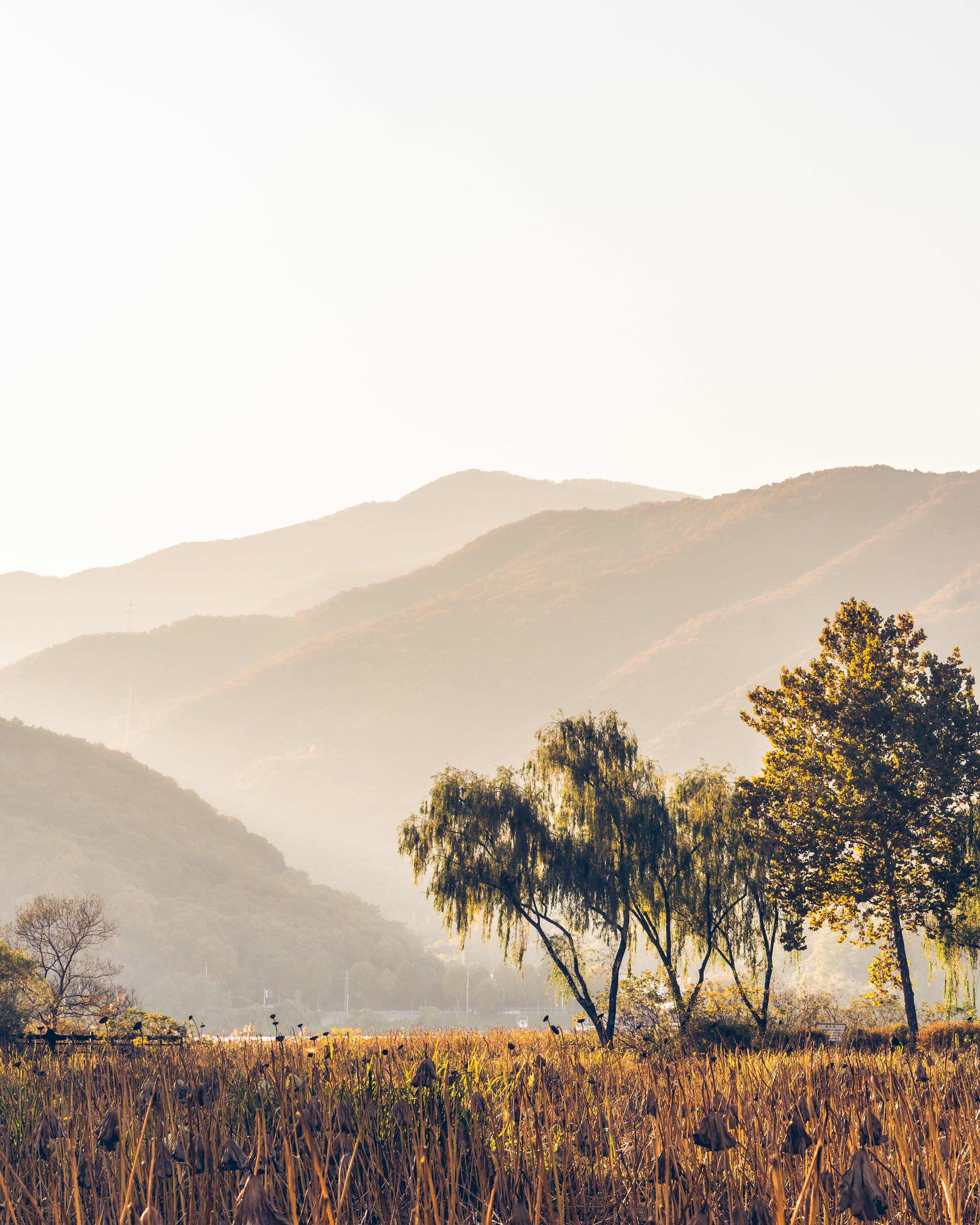 Kostenloses Stock Foto zu bäume, berg, dämmerung, feld