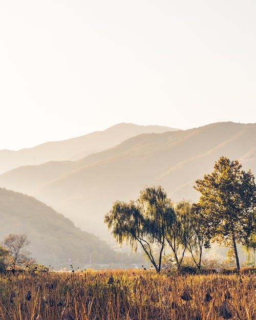 Foto profissional grátis de alvorecer, área, árvores, cênico