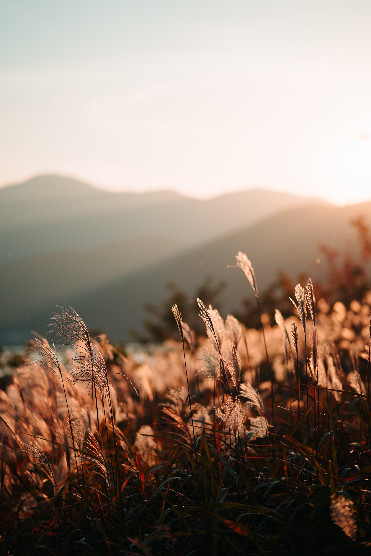 Darmowe zdjęcie z galerii z góra, jasny, krajobraz, lato