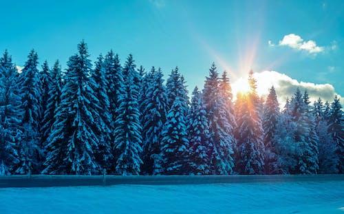 คลังภาพถ่ายฟรี ของ การถ่ายภาพ, การถ่ายภาพฤดูหนาว, คริสต์มาส, ช่วงแสงสีทอง