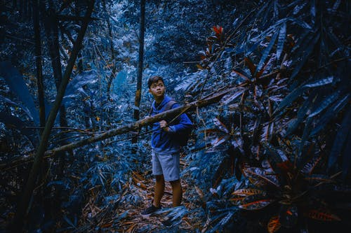 Gratis arkivbilde med blå, blå skog, magisk, skog