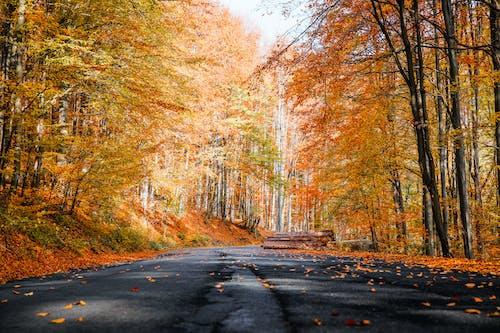 Fotobanka sbezplatnými fotkami na tému cesta, jesenné listy, krajina, les