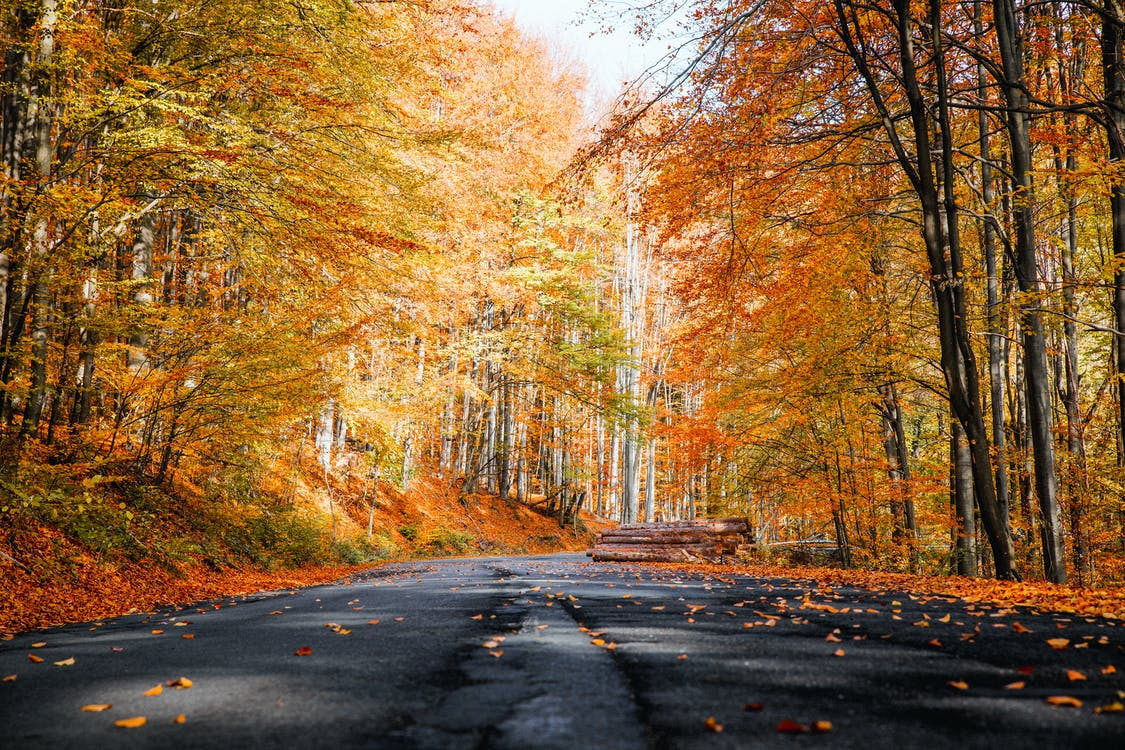 Photo of Roadway During Fall