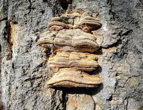균류, 나무 껍질, 트롤의 무료 스톡 사진