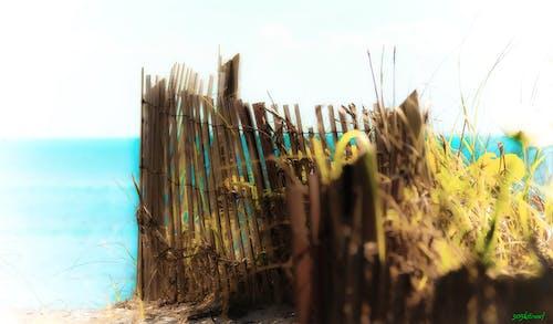 邁阿密, 风筝冲浪, 风筝登机 的 免费素材照片