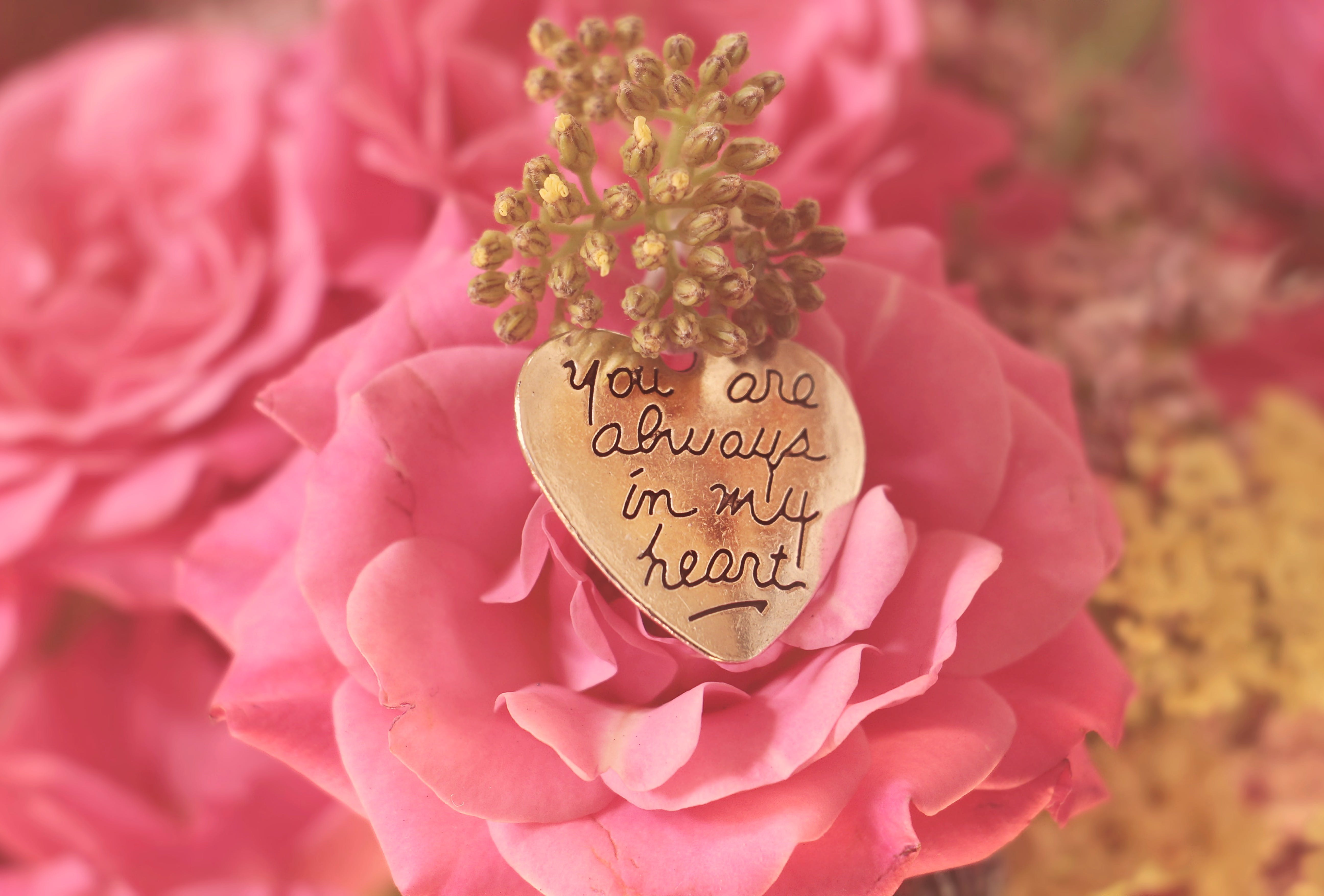 Free stock photo of heart, flowers, petals, bouquet