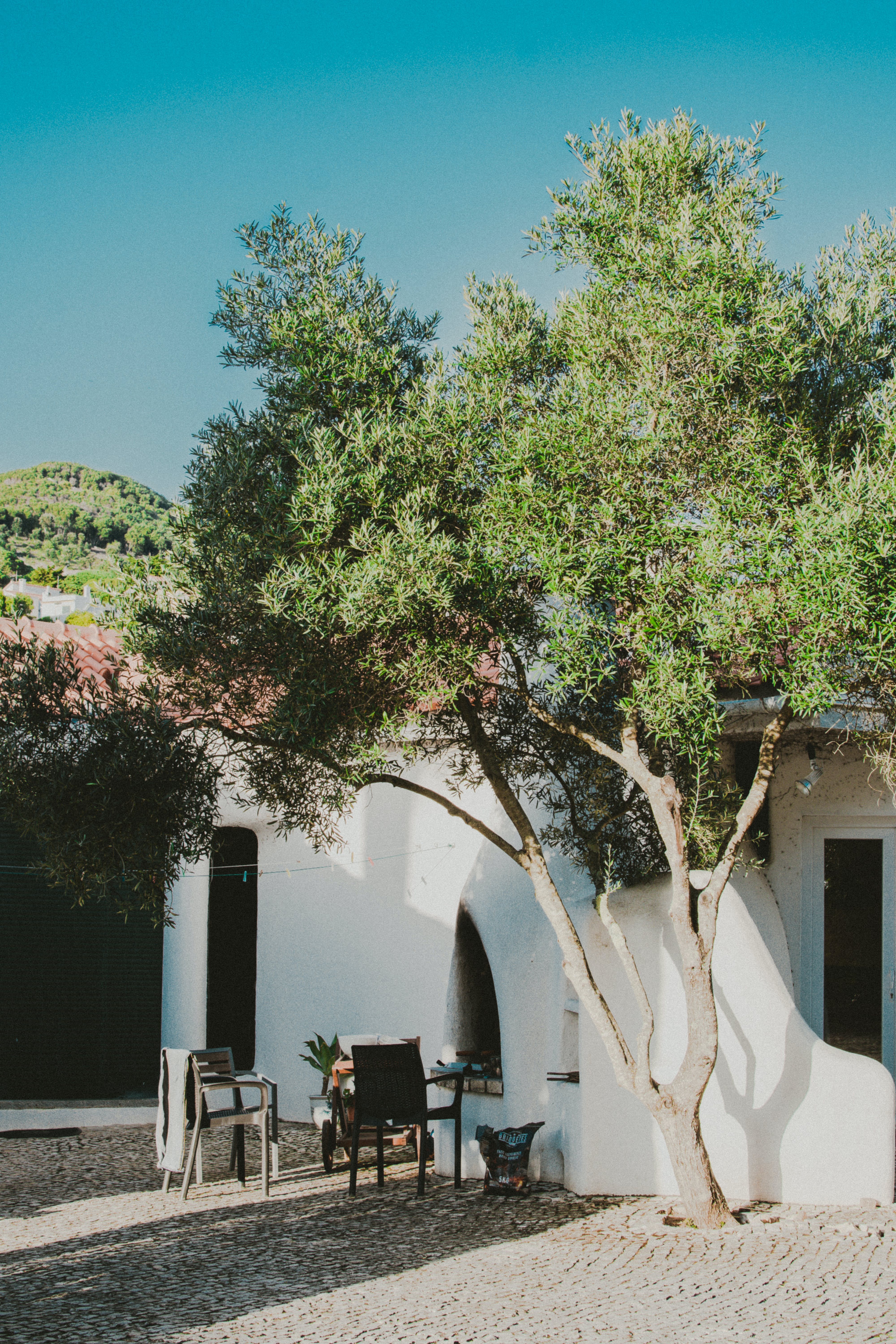 Green Leafed Tree Beside White Concrete House