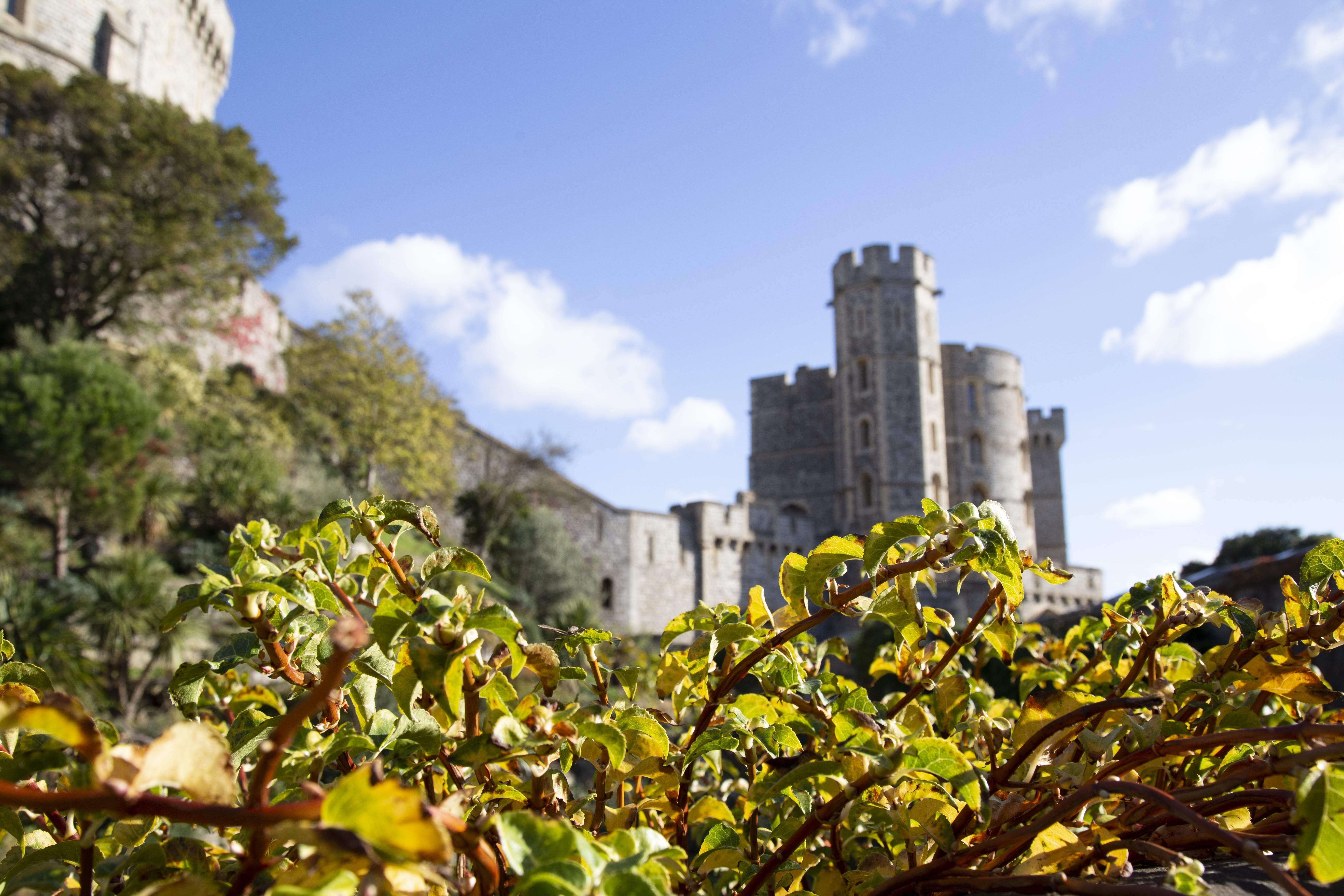 Free stock photo of blue skies, blurred background, brambles, castle