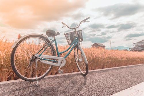 altın saat, bisiklet, bisiklet binmek, denizaşırı içeren Ücretsiz stok fotoğraf
