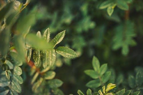 bitki, büyüme, çevre, çim içeren Ücretsiz stok fotoğraf