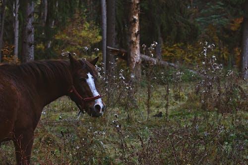 Základová fotografie zdarma na téma denní světlo, hospodářská zvířata, klisna, kůň
