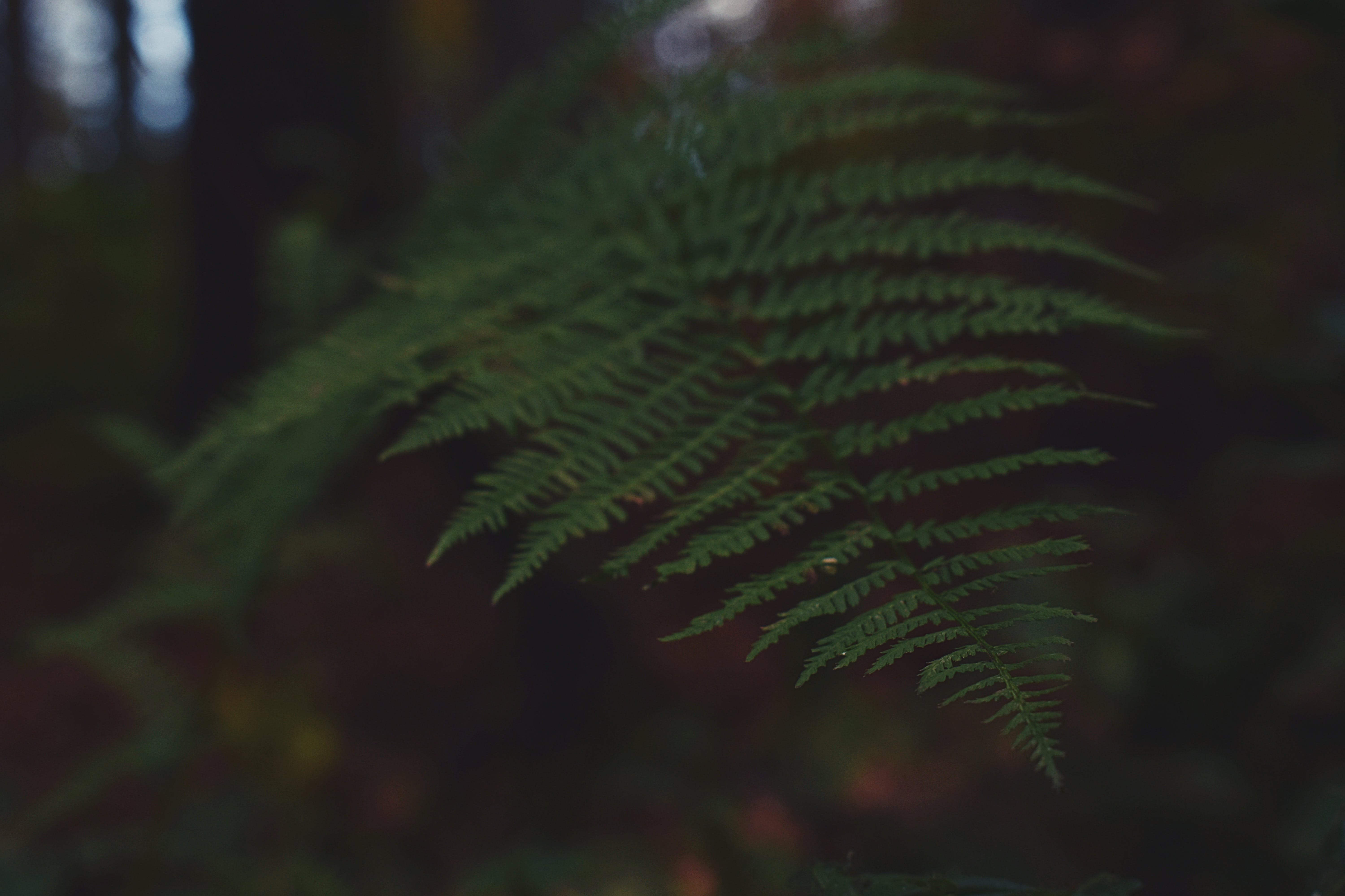 Close-up Photography of Green Fern Plant