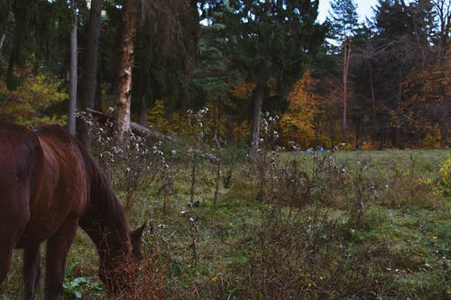 คลังภาพถ่ายฟรี ของ กลางวัน, การกิน, ต้นไม้, ธรรมชาติ