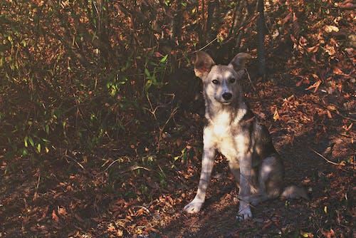 Wild Dog Sitting in a Leafy Spot