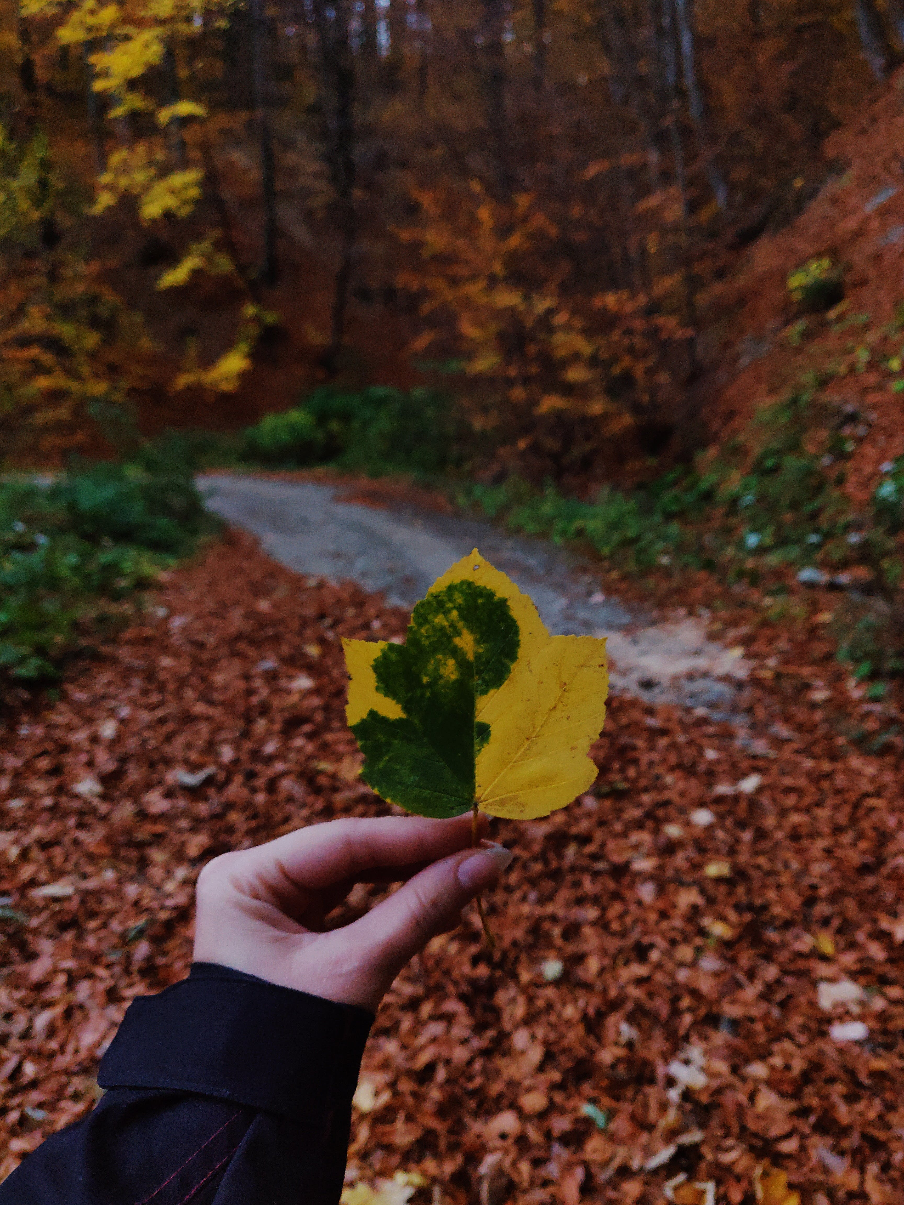 Person Holding Green and Yellow Leaf