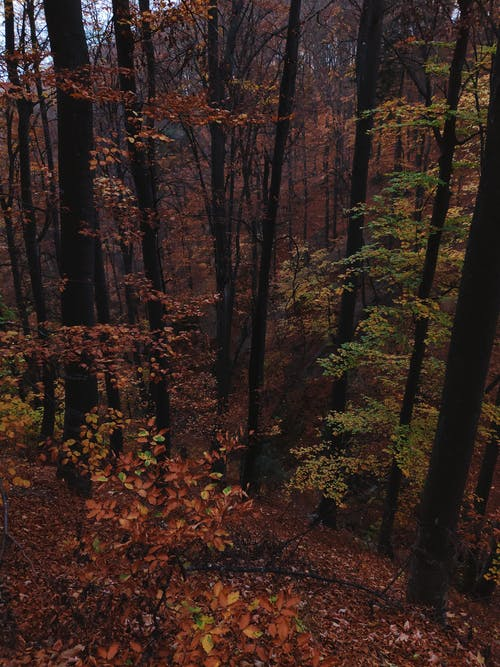 Gratis arkivbilde med årstid, bark, bartre, bjeff