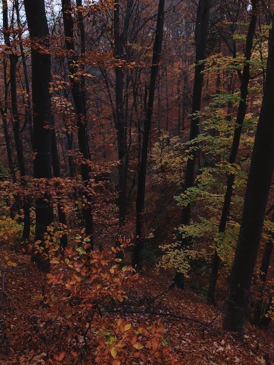 гавкіт, дерева, Деревина