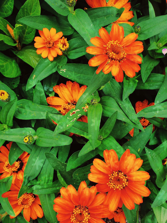 꽃, 꽃이 피는, 꽃잎, 밝은의 무료 스톡 사진