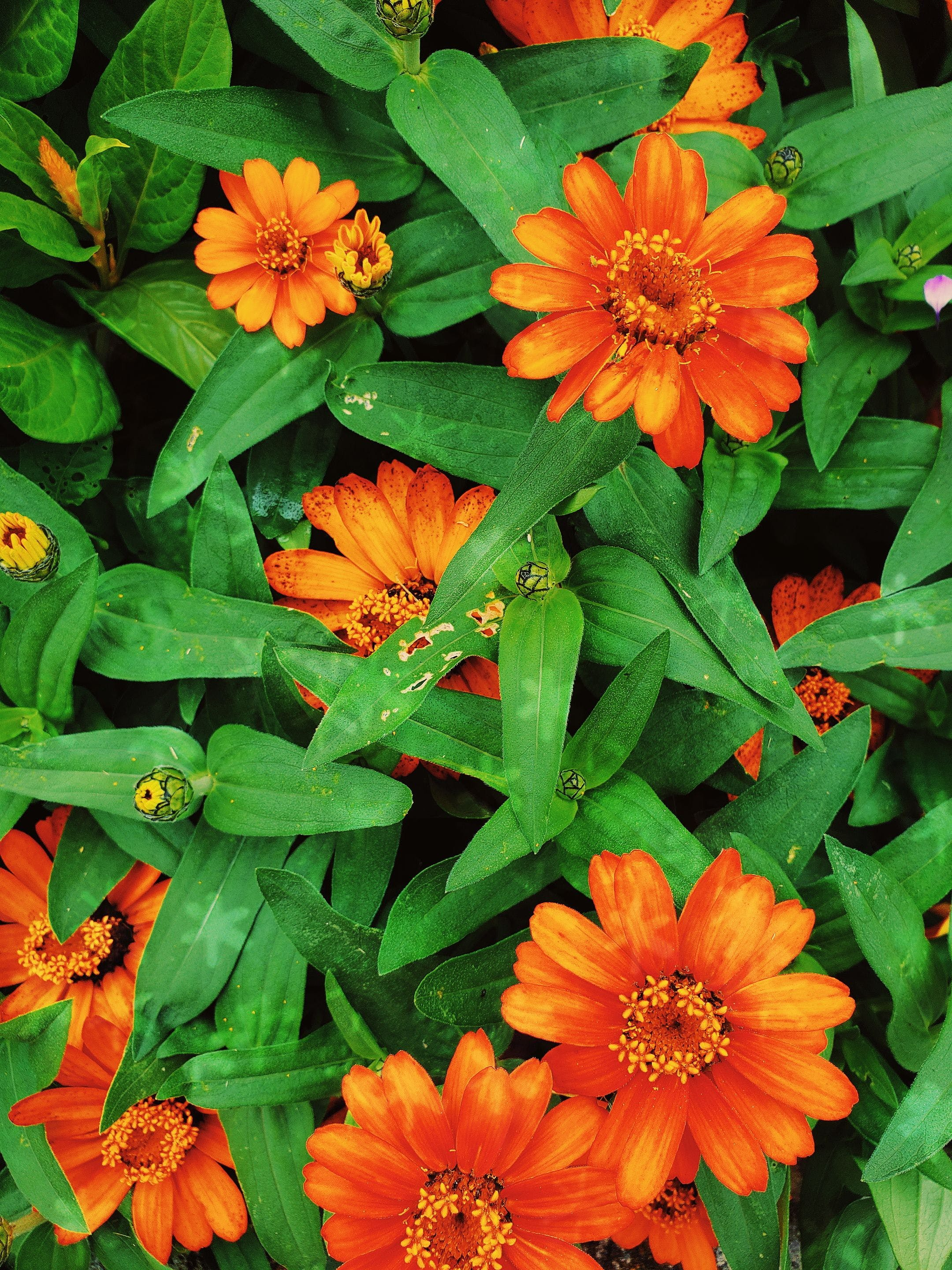 Closeup View of Orange Flowers