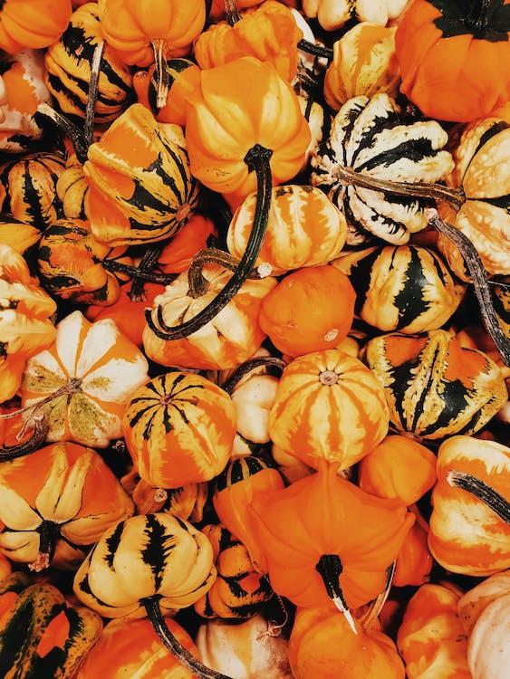 Fill the Frame Photograph of Pumpkin