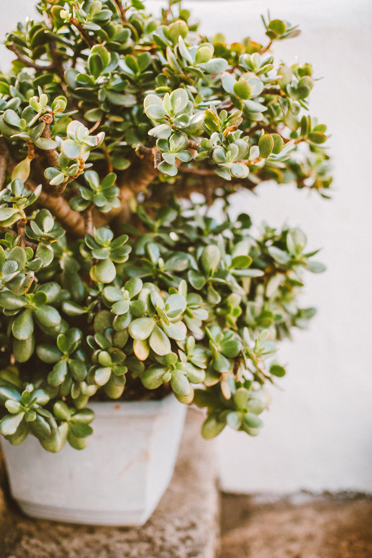 Foto d'estoc gratuïta de bonic, bonsai, branca, brillant