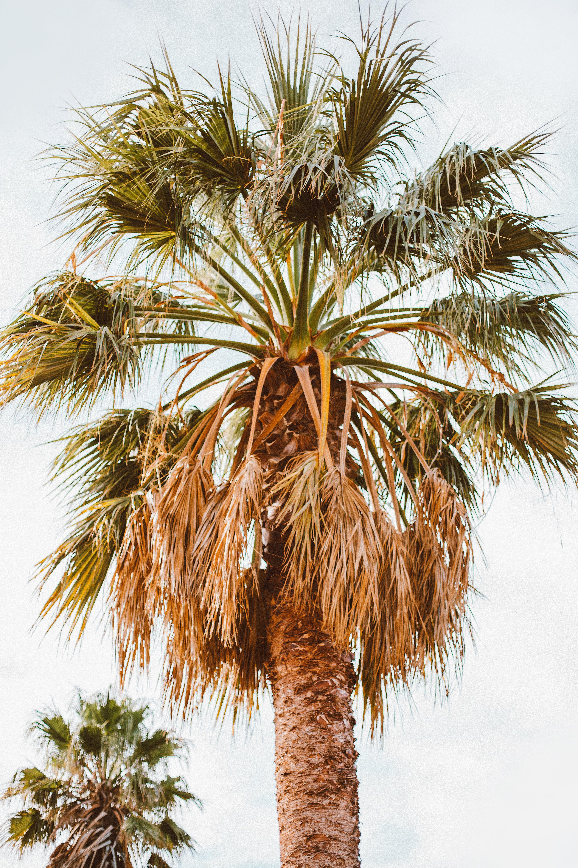 Kostenloses Stock Foto zu baum, bäume, farbe, kokosnussbaum