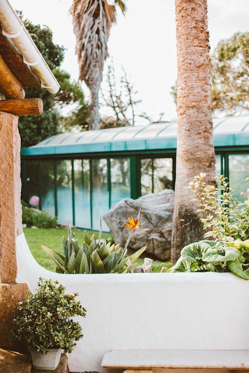ağaç, ağaç gövdesi, Bahçe, bina içeren Ücretsiz stok fotoğraf