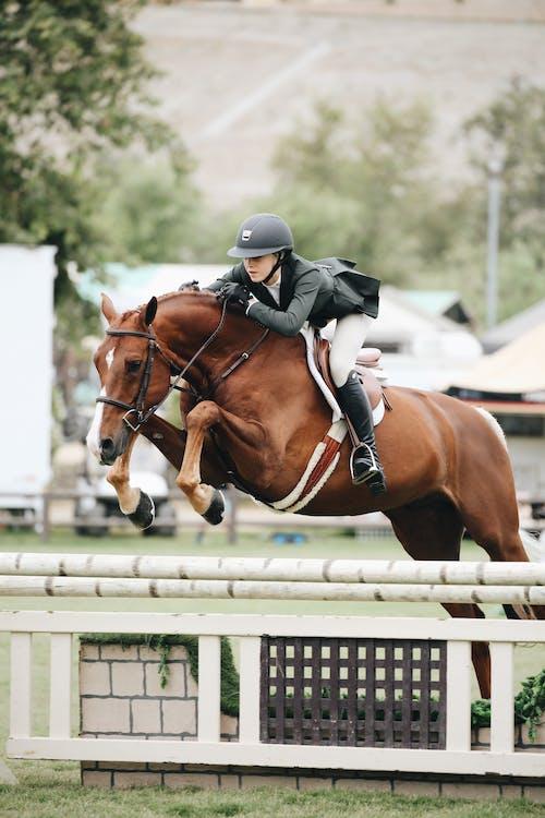 cadira de muntar, carrera, cavall