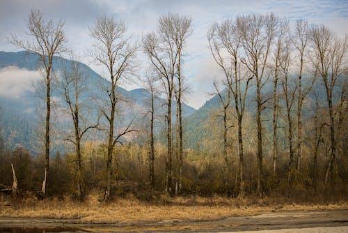 Foto d'estoc gratuïta de alba, arbres, bagul, bonic