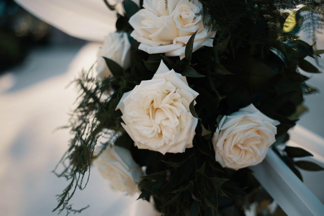 插花, 新娘, 植物群
