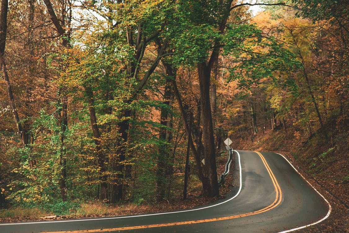 Gray Concrete Roadway Beside Green and Brown Leafed Trees