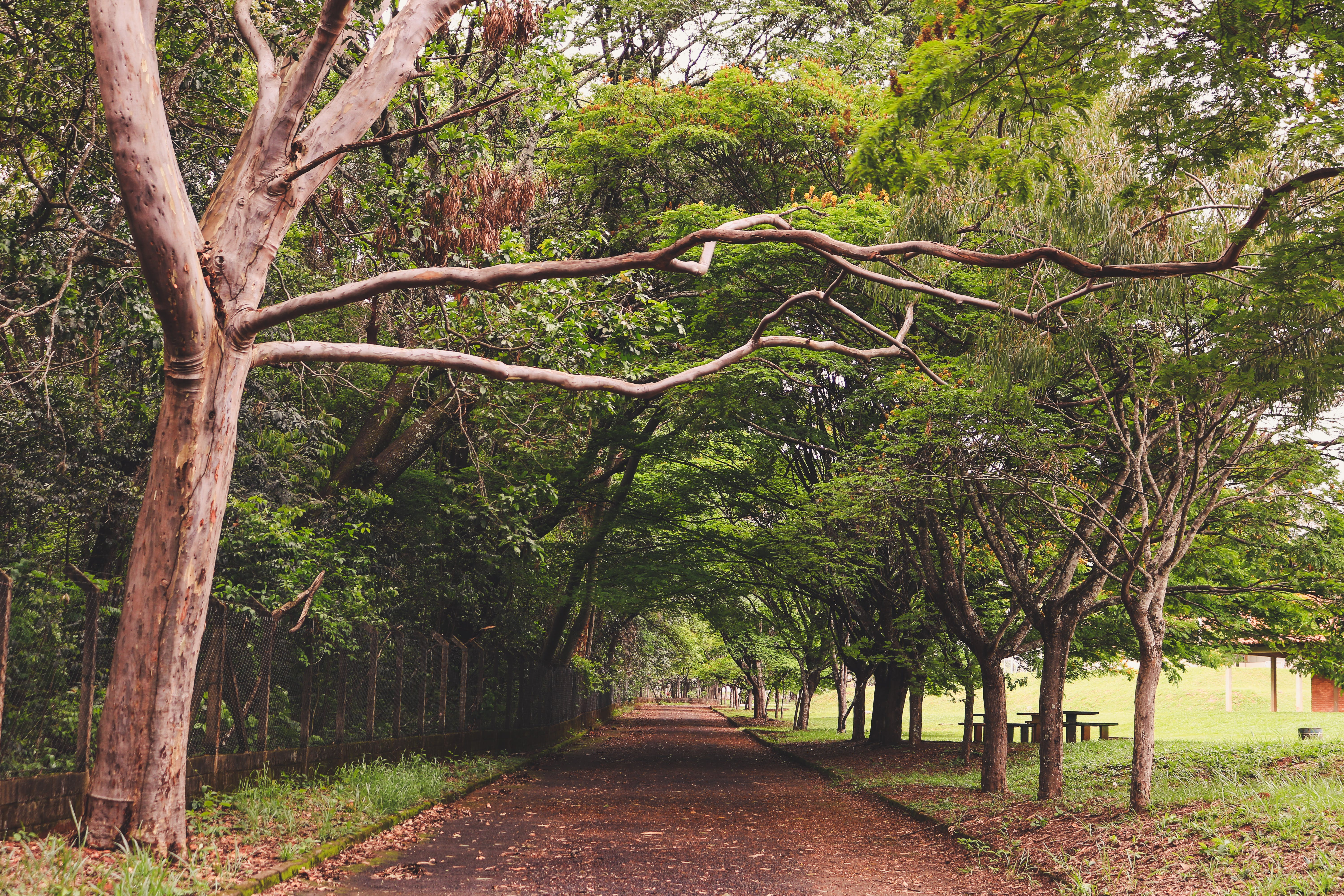 Free stock photo of forest path, green, nature, park