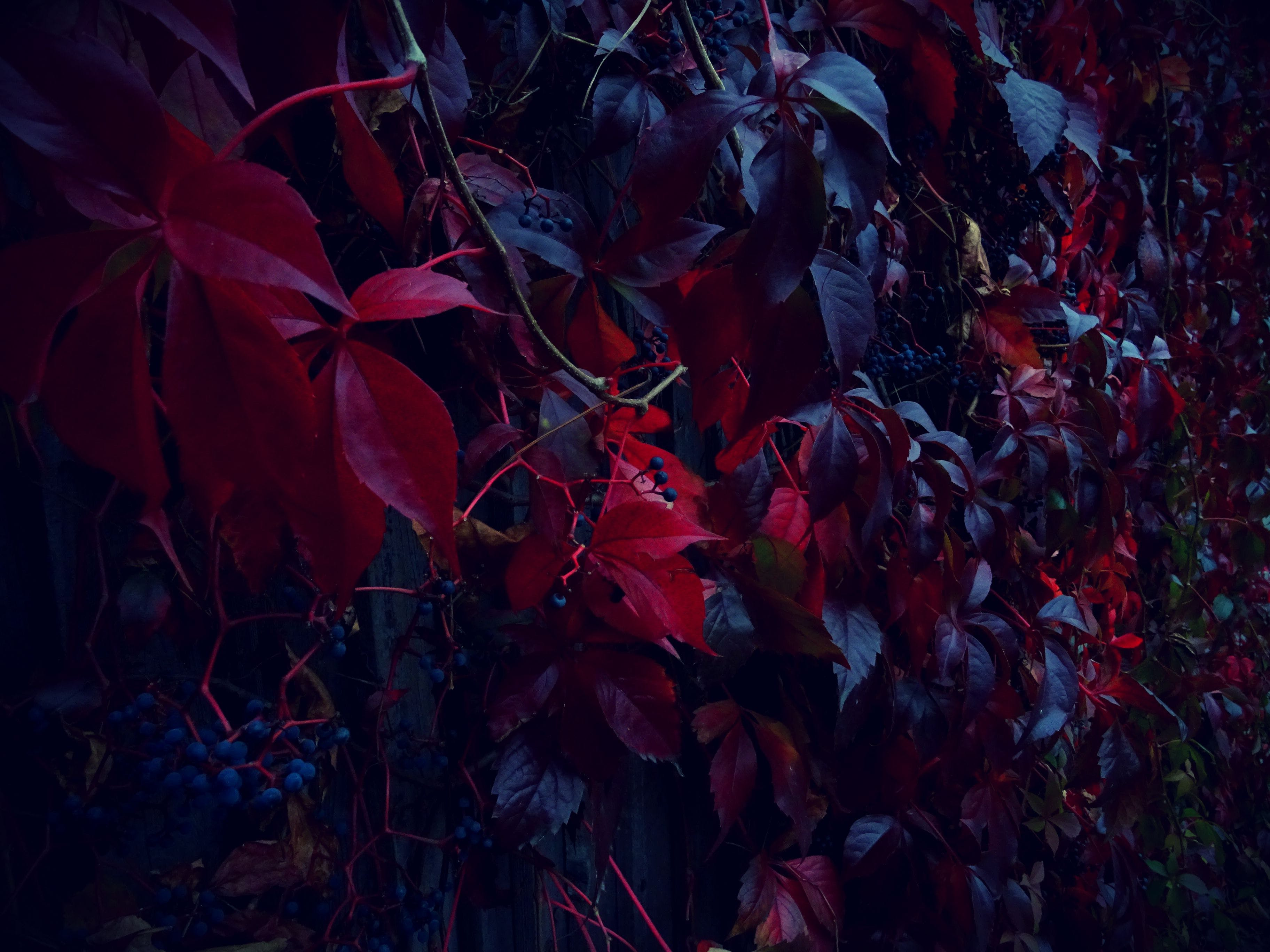 Red Leafed Plants on Gray Wall