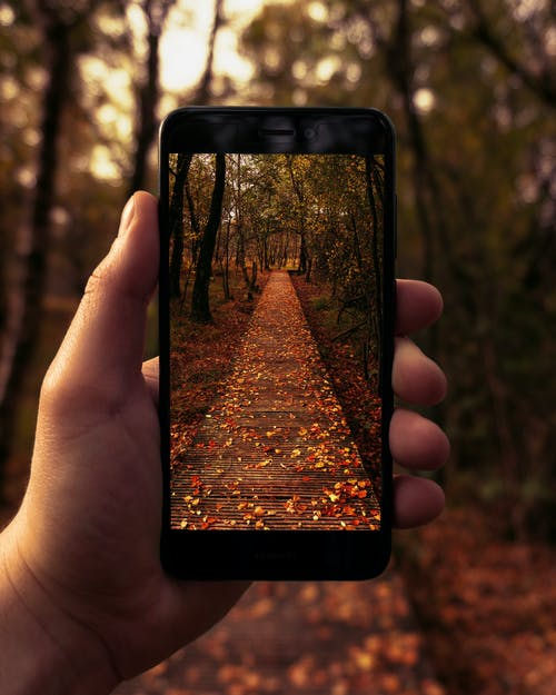 Free stock photo of catwalk, device, electronics, forest