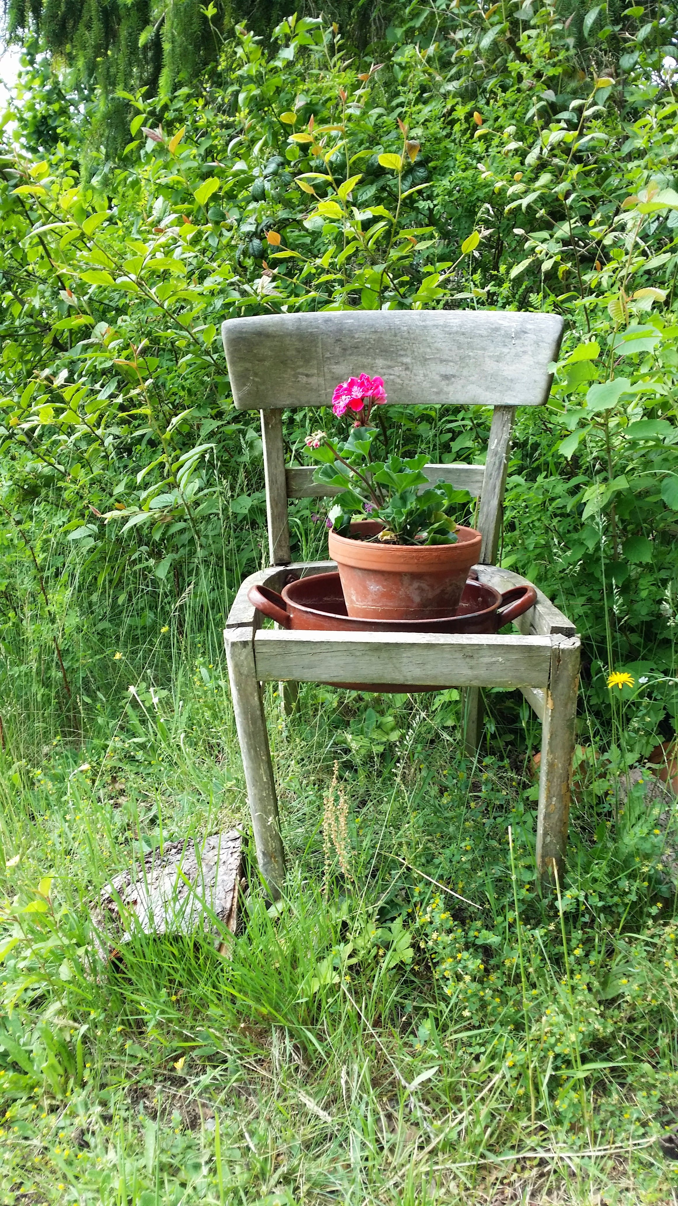 Free stock photo of chair, nature