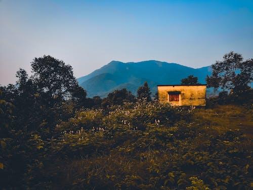 Foto stok gratis alam, awan, hutan, indah