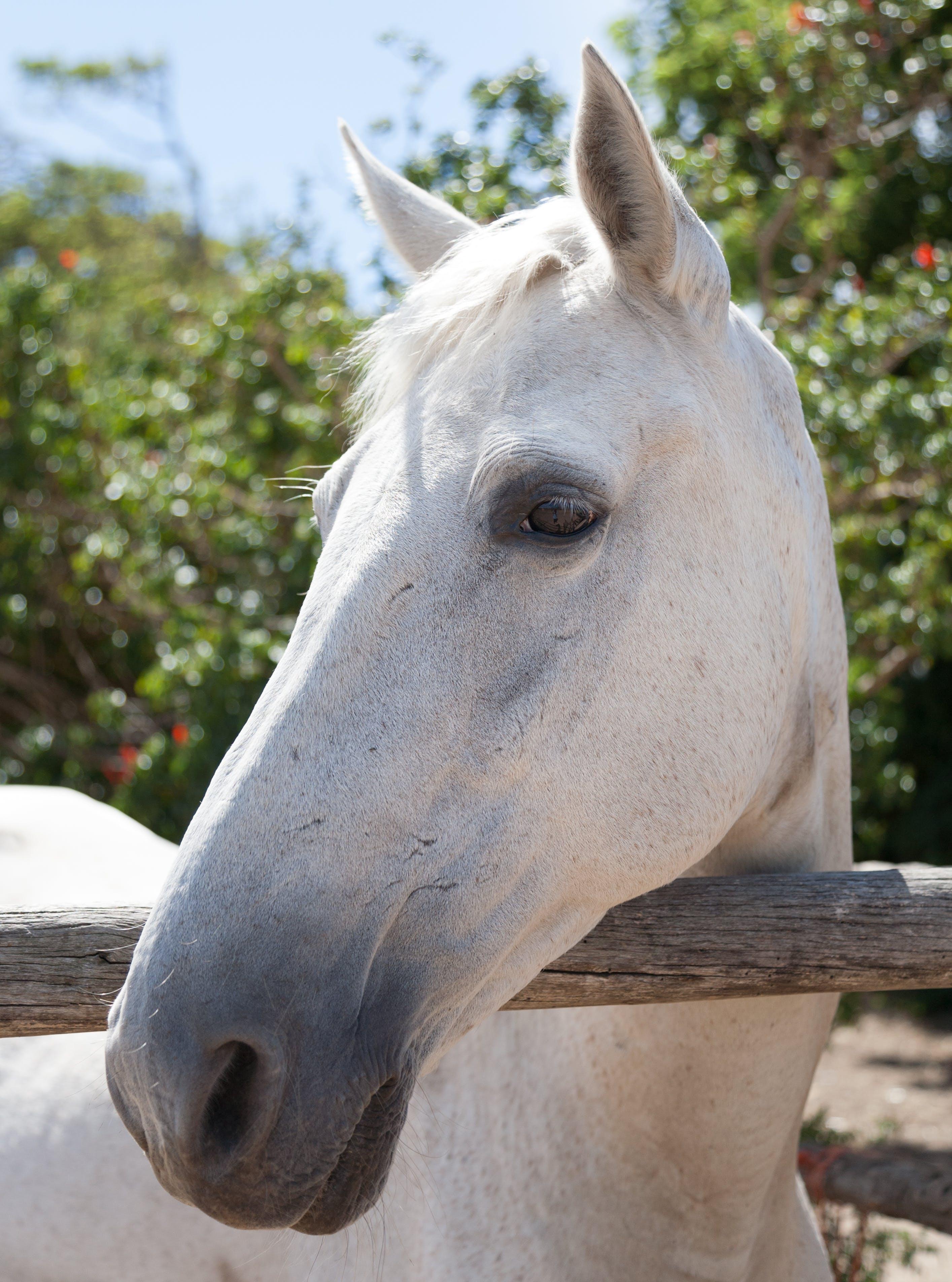 動物, 哺乳類, 牝馬, 種牡馬の無料の写真素材